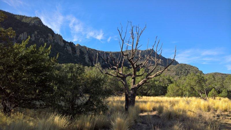 Enjoy this serene meadowland along the Pinnacles Trail.