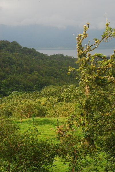 Look out over the pasture to rainforest and Lake Arenal in the early morning.