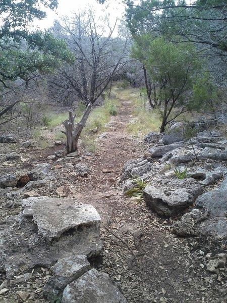 One of the few technical sections just west of the Russell Park Trailhead.