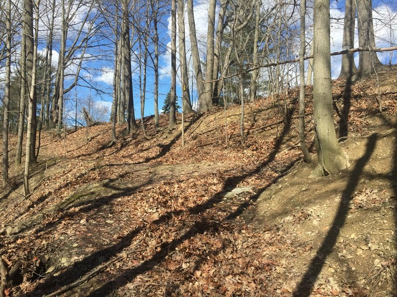 This is an important trail intersection on uphill switchbacks along the Sagamore Creek Loop; left goes to private property, so go RIGHT to stay on the trail.