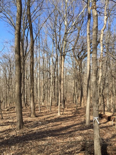 Trail 3 at Harmonie State Park travels through the area's characteristic hardwood forests.