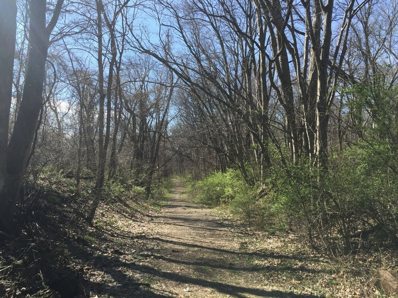Trail 2 is a bit wider than some of the park's other trails, but that doesn't make your surroundings any less beautiful.