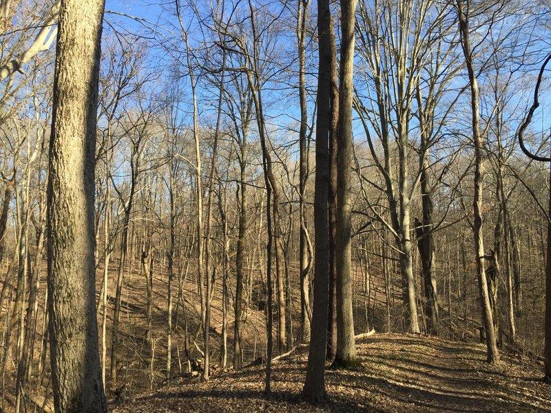 Trail 1 follows undulating terrain through a leafy hardwood forest.