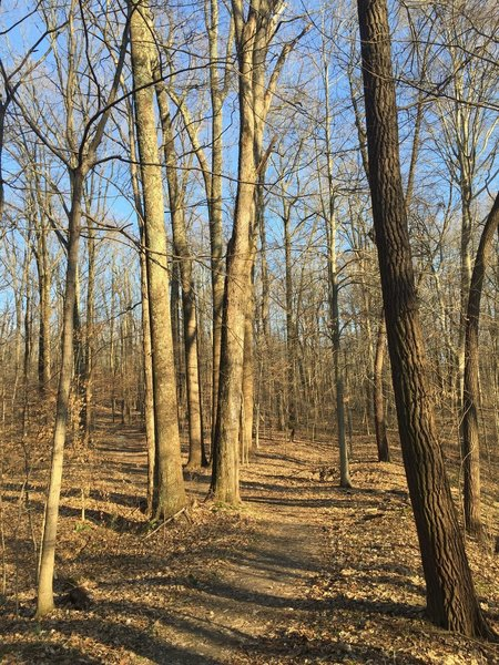 Trail 4 is a great choice if you're looking to experience quiet woodlands.