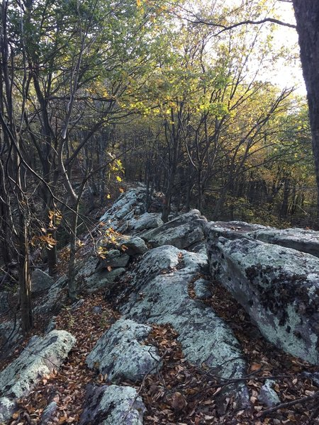 The MST gets quite rocky on top of the ridge.