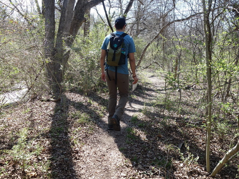 The Forked Tail Creek Trail offers a pleasant experience hiking through dense undergrowth.