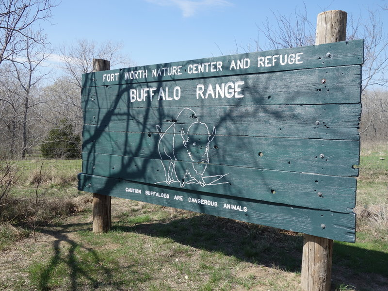 Check out the Buffalo Viewing Area along Wild Plum South!