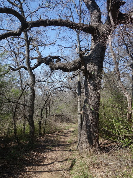 The Wild Plum Trail starts off by quickly thrusting you out of the parking area and into the forest.