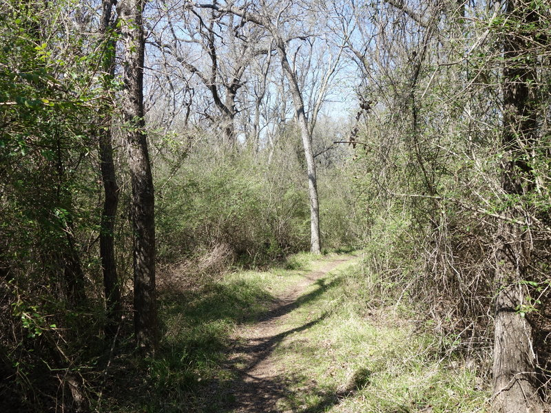 Wild Plum Trail offers a pleasant experience through verdant woodlands.