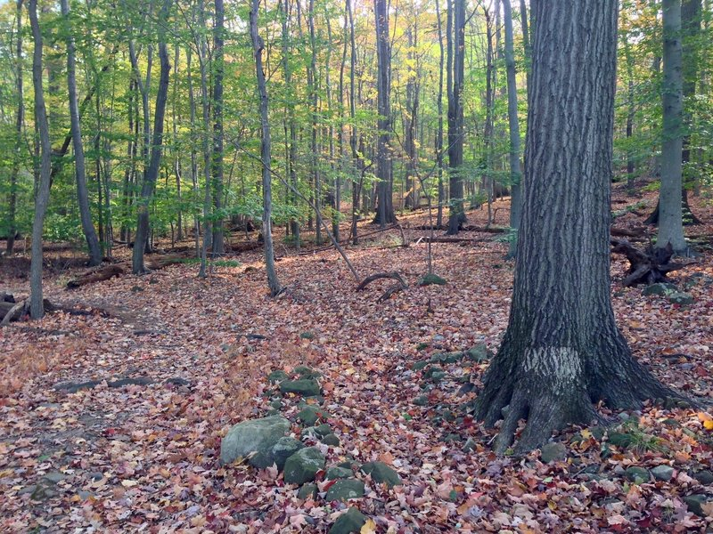 A charming forest view off the Lenape Trail in the South Mountain Reservation.