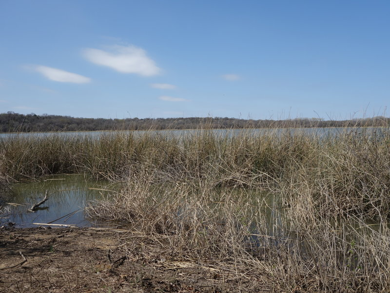The north end of Greer Island offers pleasant views of the water and potentially some wildlife!
