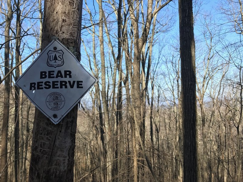 Bear Reserve in Citico Wilderness on Trail 95.