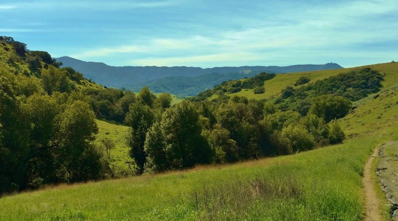 Looking southwest from the Fortini Trail, the Santa Cruz Mountains stand in the distance with Mt. Umunhum on the right.