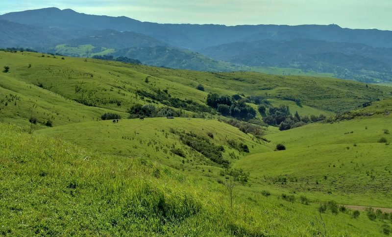 Looking south from Coyote Peak in the Santa Teresa Hills, the Santa Cruz Mountains stand in the distance.