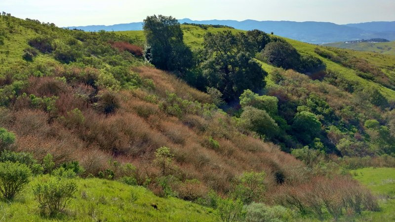 Spring brings greenery to the Coyote Peak Trail, with the Santa Cruz Mountains and Mt. Umunhum in the distance.