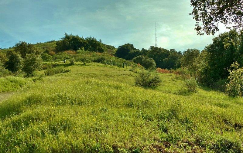 Climbing to Coyote Peak on its namesake trail, enjoy lush green grasses and pleasant views.