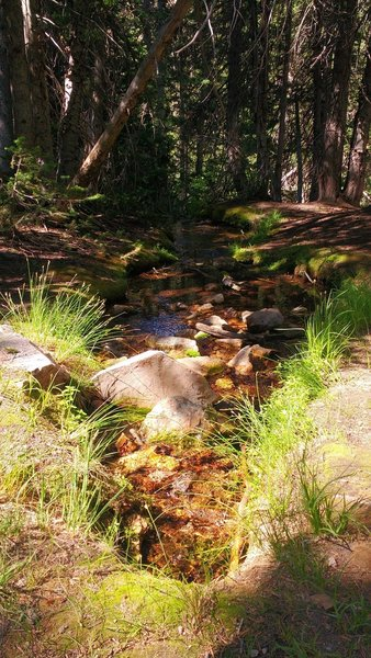 A small stream flows beside the White Pine Lake Trail.