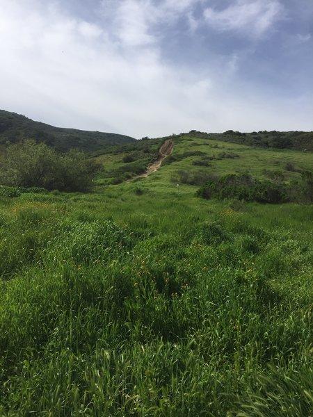 Rare green hills flourish after winter rains along the Mathis Canyon Trail.