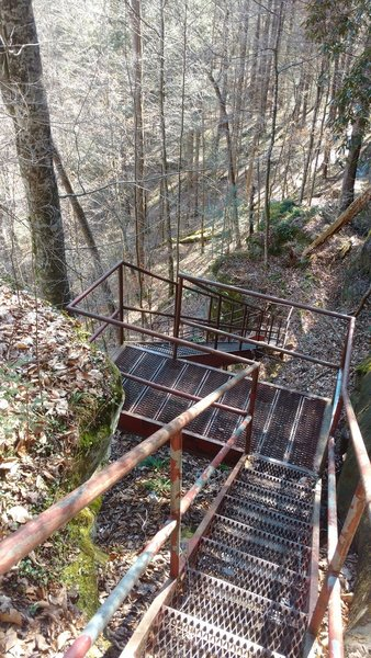 Stairs head down to Yahoo Falls and the Sheltowee Trace.