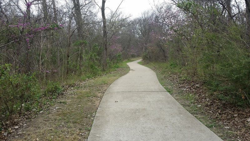 The Trail at the Woods is littered with dogwood blooms.
