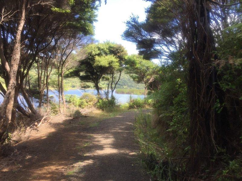The trail heads around the lake near Bethells Beach.