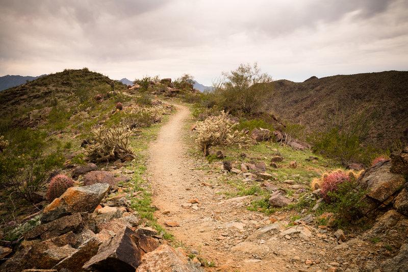 The Pyramid Trail traverses along the ridgeline through typical Sonoran Desert flora.