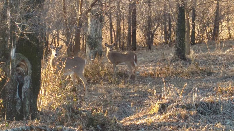 Keep your eyes peeled for grazing deer at Chalco Hills Recreation Area.