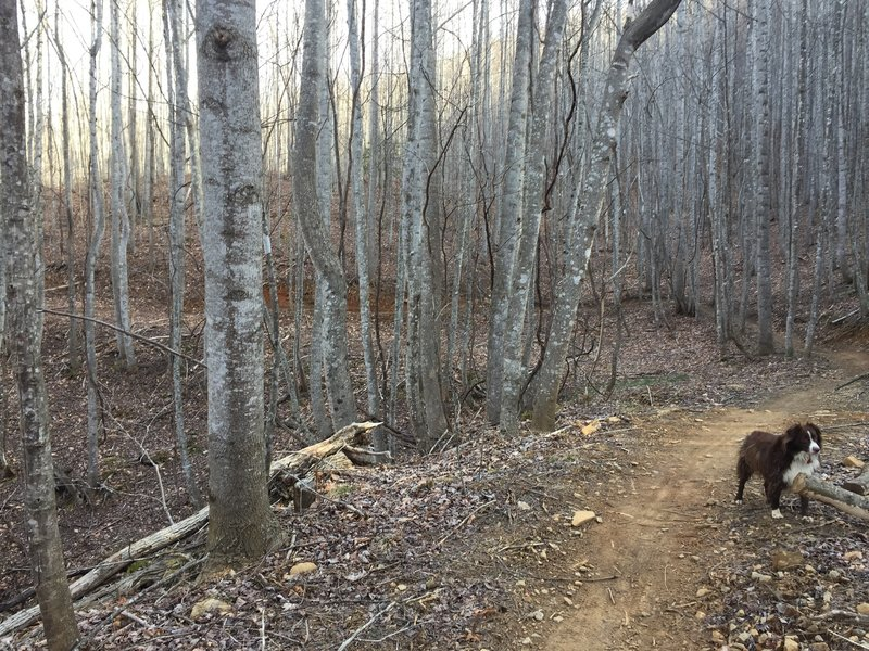 The climb up Spencer Branch takes you through a thriving hardwood forest.