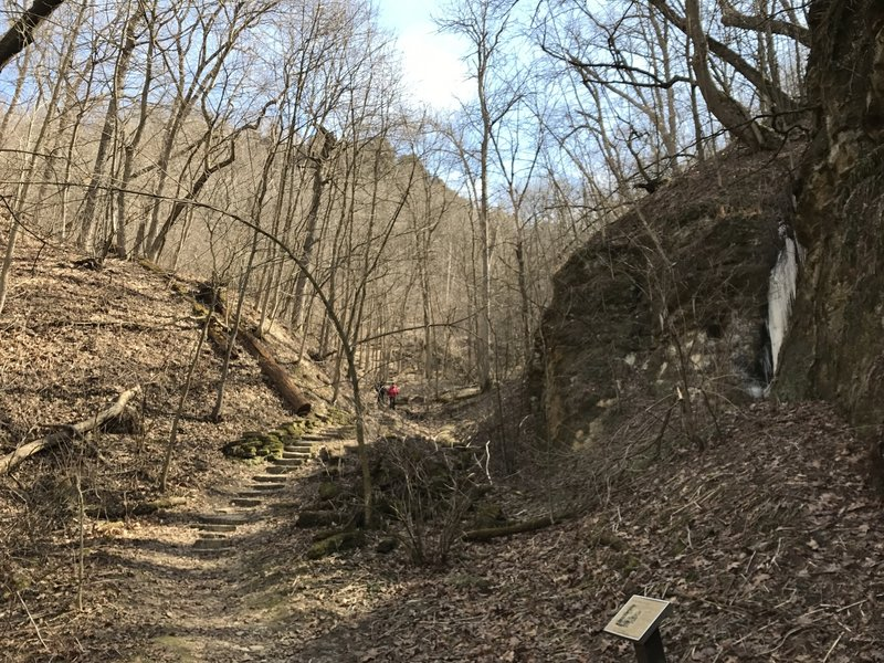 The ravine near the beginning of Brady's Bluff Trail still holds ice from a small seep during the spring. The bluff can be seen in the background.
