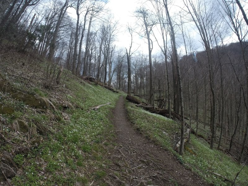The Low Gap Trail is smooth, yet steep through this section.