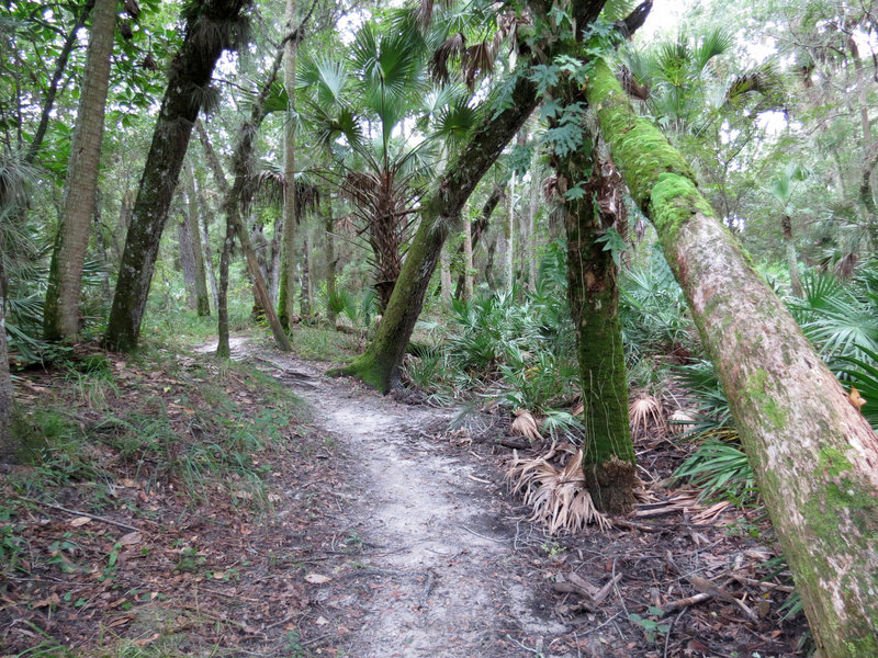 Enjoy pleasant sections of smooth singletrack along the Kolokee Loop Trail.