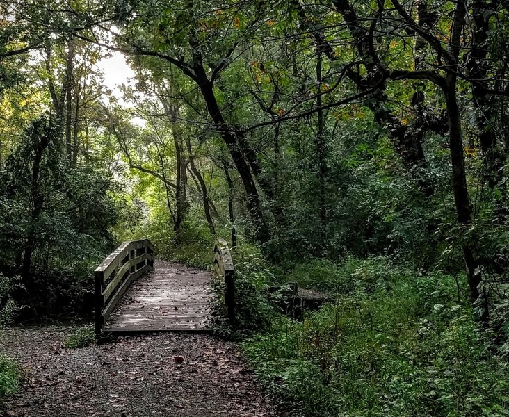 In the summertime, the Fall Creek Trail comes alive with lush greenery.