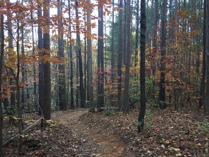 South Main Trail is primed and perfect in the fall.