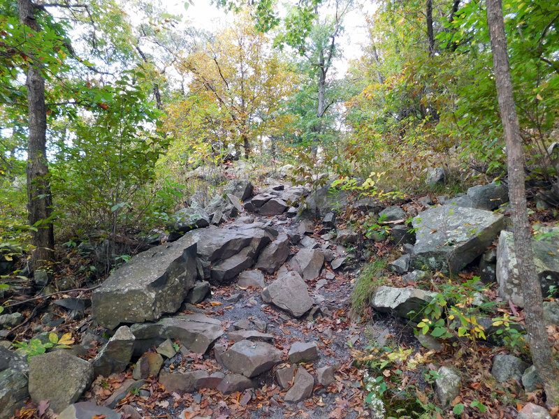 This is an example of the rocky terrain you'll encounter on River Trail.
