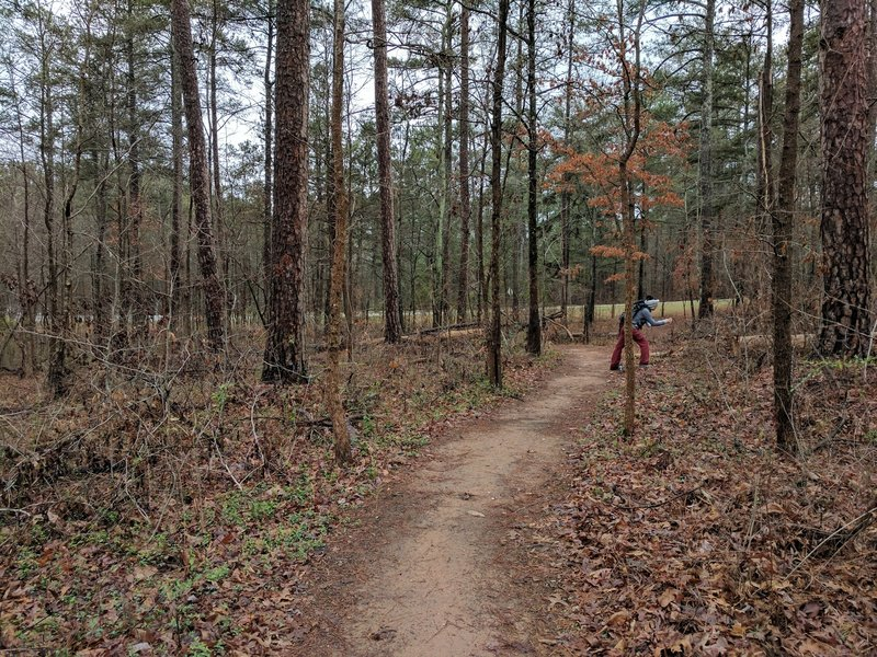 The trail's buffed surface allows you to not worry about your feet and instead enjoy your natural surroundings.