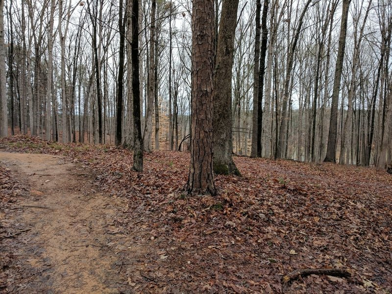 Along the trail, enjoy dense hardwood forests littered with fallen leaves.