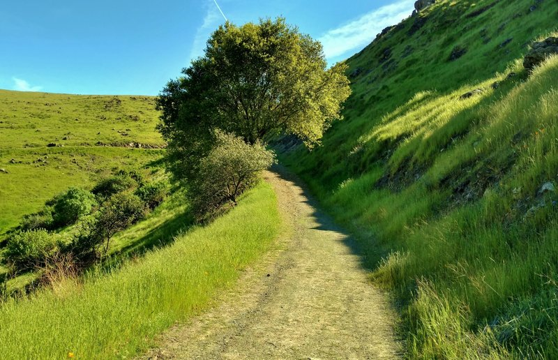 High on Bernal Hill Trail in the grass-covered Santa Teresa Hills, enjoy a verdant landscape as you travel along a smooth trail.