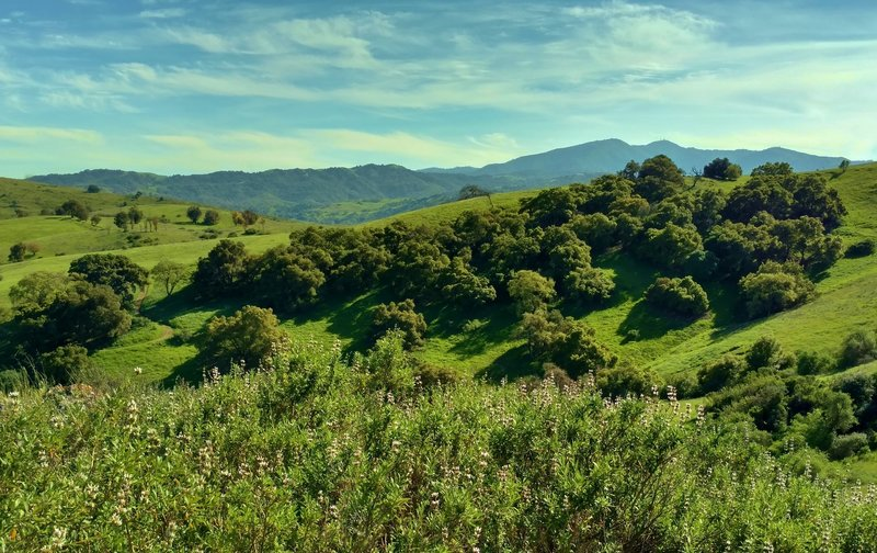 Along the Bernal Hill Trail, the Santa Teresa Hills grow verdant in the springtime with the Santa Cruz Mountains in the distance.