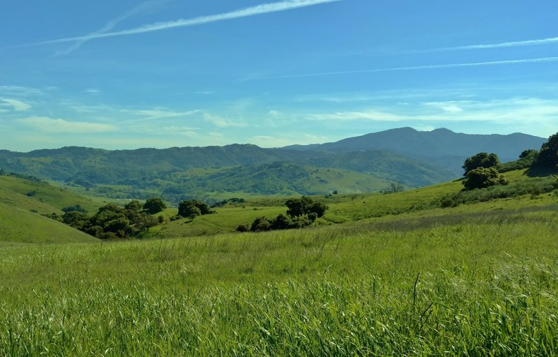 The Santa Cruz Mountains provide the background to your time traversing the rolling green hills of Santa Teresa County Park along the Vista Loop.