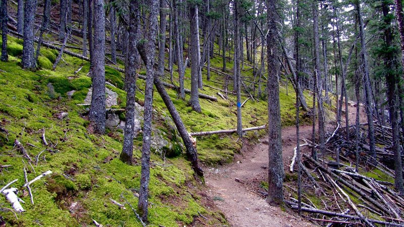 Heading back toward Sylvan Lake, enjoy gorgeous, quiet, moss-covered woodlands.