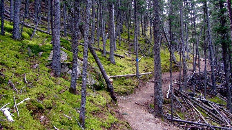 Heading back toward Sylvan Lake, enjoy gorgeous, quiet, moss-covered woodlands.