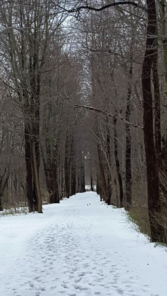 March is a wonderful time to experience the winter wonderland that is the Paint Branch Trail.