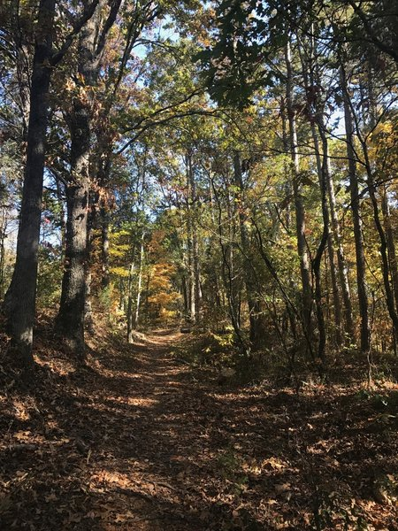 Fall colors descend on the Sinking Creek Trail.