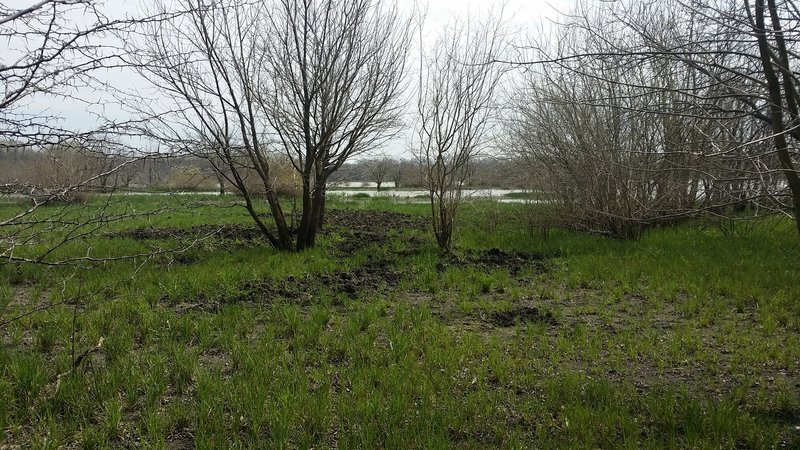 This is a view from the Old Wetlands Road. Notice the wild hog wallow just off the trail.