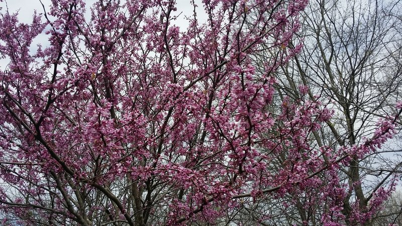 Lovely spring blooms flourish along the High Trail.