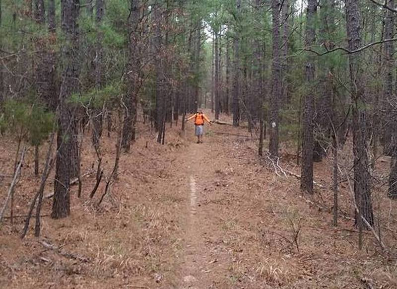 This is a long straight section of the Boardstand Trail with new-growth pines on either side.