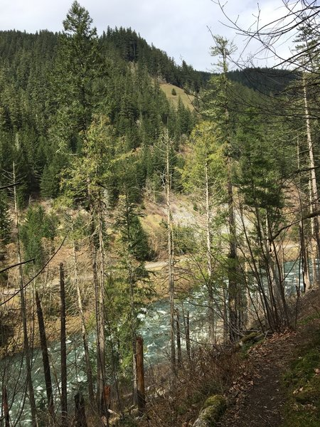 Looking down on the Clackamas from the trail, enjoy white water and verdant forests.