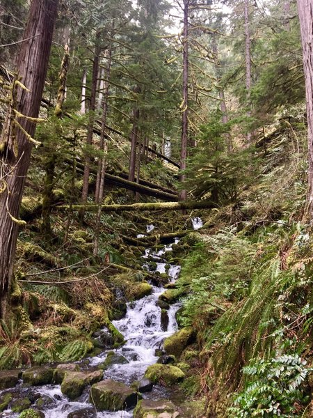 A stream crossing provides a pleasant view up the ravine on the Clackamas River Trail.