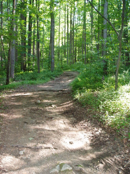 This is typical for the Yellow Trail as it heads toward the Orange Trail.