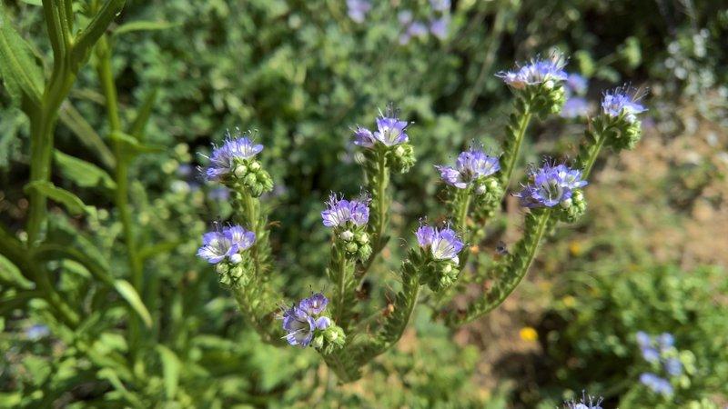 Multiple species of wildflower grow along Ernst Tinaja.